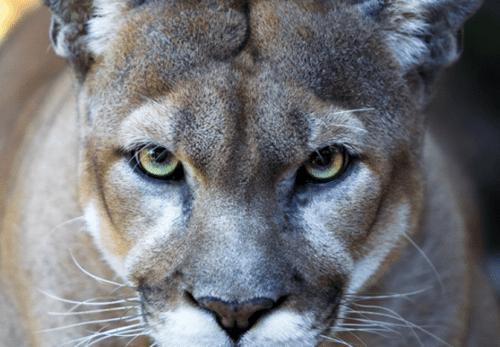 defenders-of-wildlife-preview